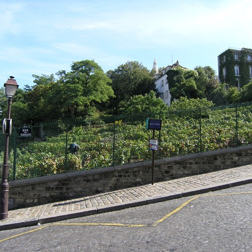 The Vineyards of Montmartre